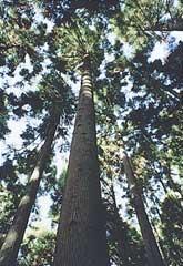 奥多摩記念林