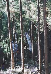 所有山林での作業風景