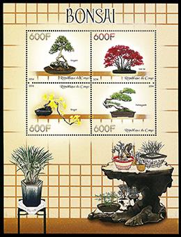 盆栽 コンゴ