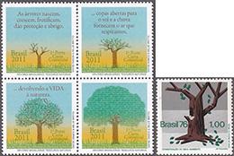 樹木保全─ブラジル