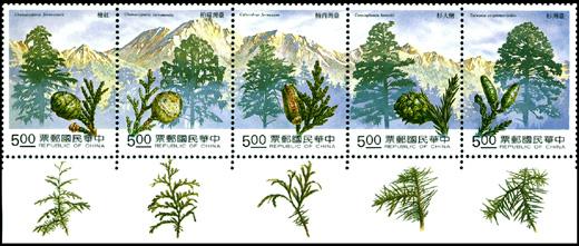 台湾の森林②―針葉樹五木