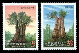 台湾の森林④―神木