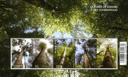 森の樹木・ベルギー