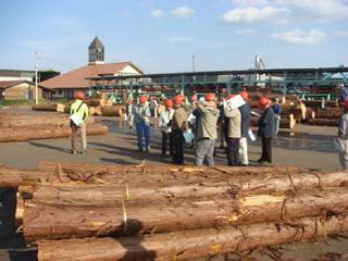 原木市場の様子①