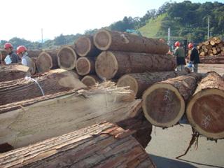 原木市場の様子②