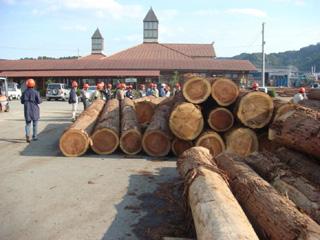 原木市場の様子③