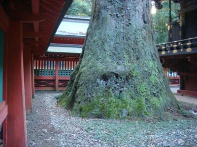 神域に鎮座する御神木の根本部分