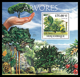 樹木を大切に!─モザンビーク